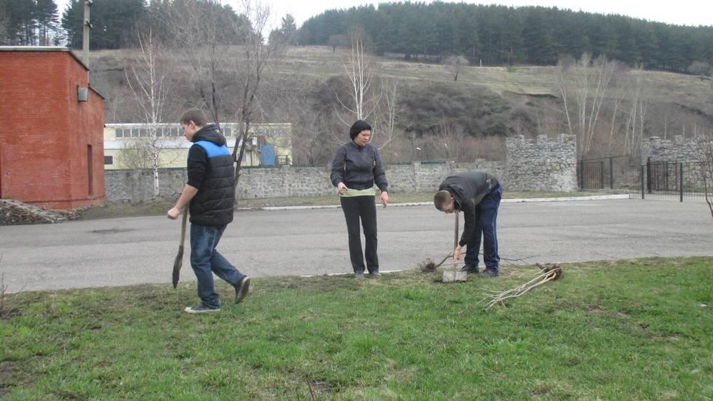 Высадка деревьев и кустарников на территории Центра