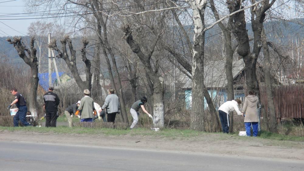 Побелка деревьев по ул.Зыряновская